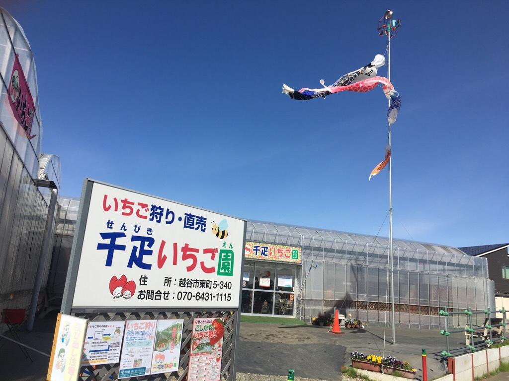 【埼玉】越谷レイクタウンのすぐ近くでいちご狩り! 千疋いちご園 in 越谷